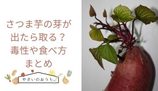 さつま芋の芽が出たら取る?毒性や食べ方まとめ