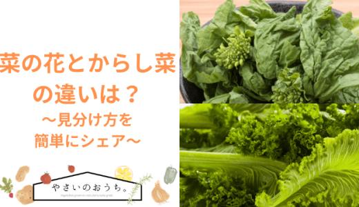 菜の花とからし菜の違いは?見分け方を簡単に判断するには?