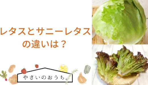 レタスとサニーレタスの違いは?栄養や調理法で区別!