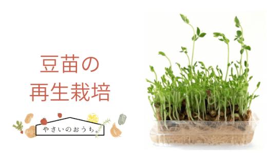 豆苗の再生栽培方法は何回まで?黒くカビたらの疑問にお答え!