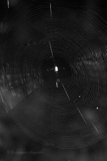 Spider-web 2