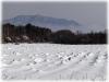 大根の畑雪景色