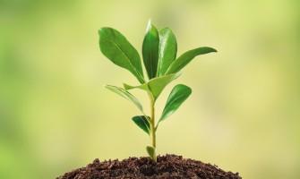 بناء الفرد في فكر الإمام رحمه الله