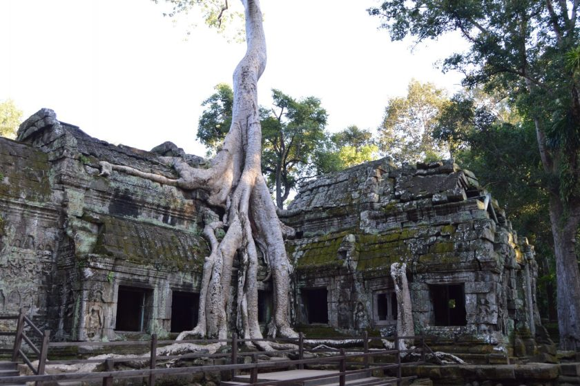 A Ta Prohm Temple structure with a tree grown on top