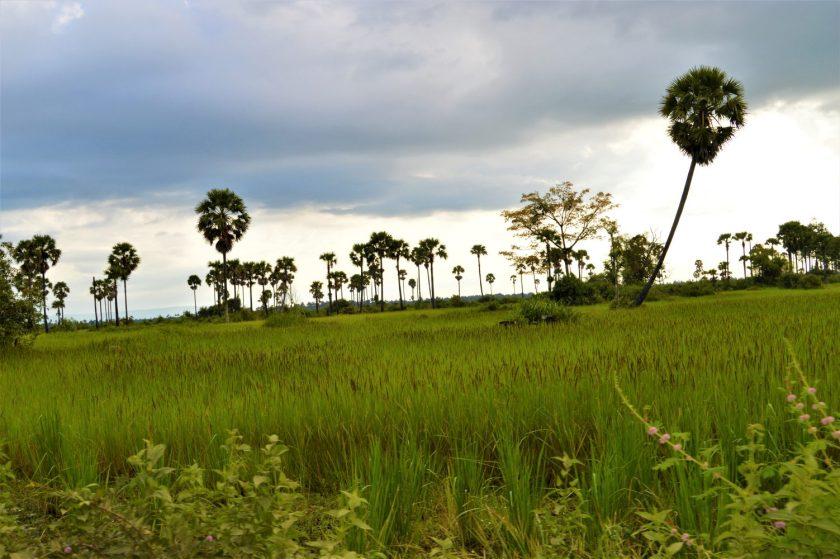 A scene in rural Cambodia