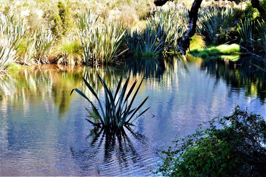 Mirror Lakes in Fiordland National Park, New Zealand