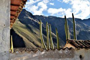 Strange vegetation on top of a house in Ollantaytambo, Peru