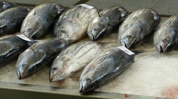 世界の水産物『漁獲量・生産量』国別ランキング