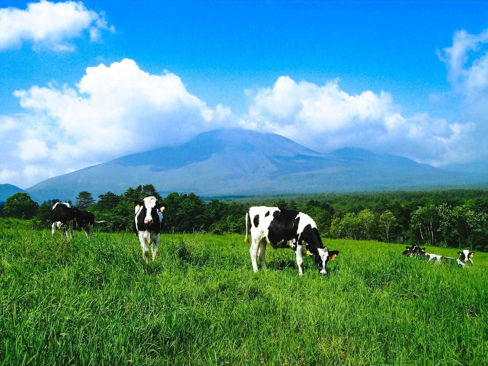 日本の畜産業の特徴と産地 一覧|小学生・中学受験