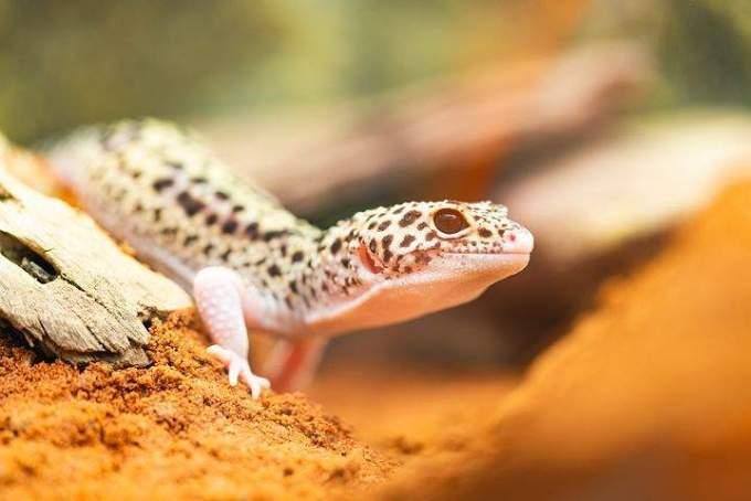 動物の種類・分類一覧|セキツイ動物・体温・呼吸など