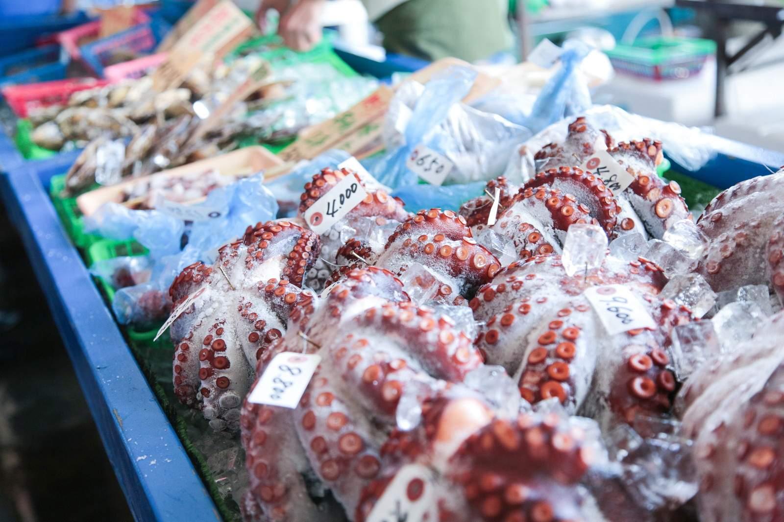 日本の漁業の特徴と盛んな地域 一覧|小学生・中学受験