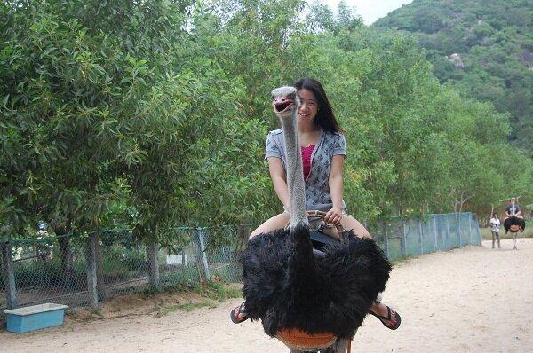 катание на страусах, острова, Нячанг