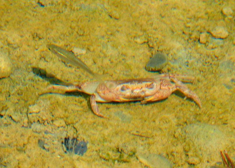 рыбка гизани, эндемик Родоса