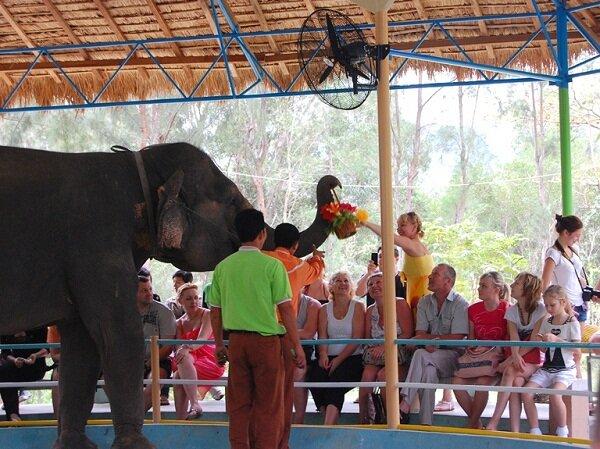 слон, острова, Нячанг