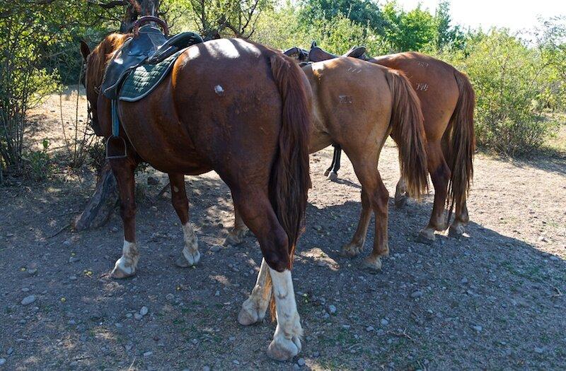 Лошади в Долине Приведений