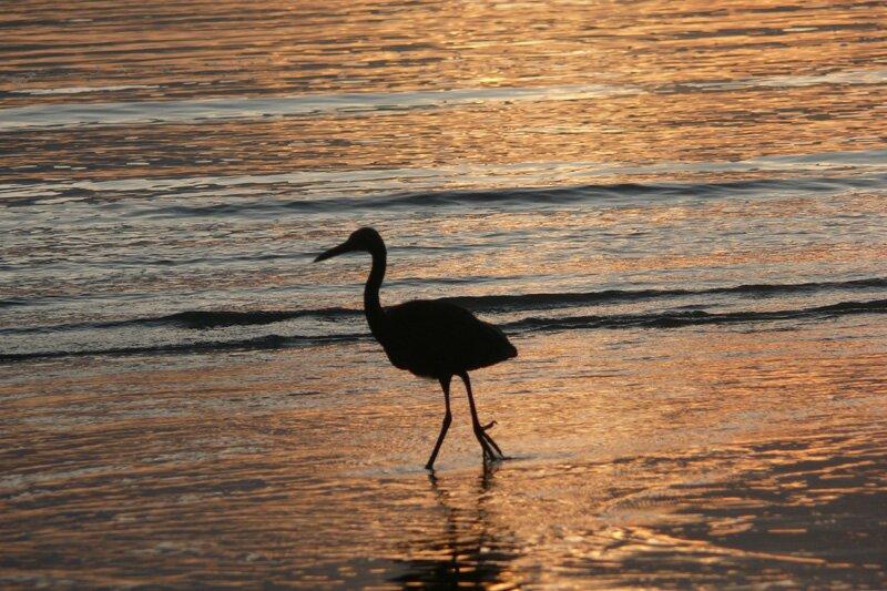 Отлив, Адамантское море