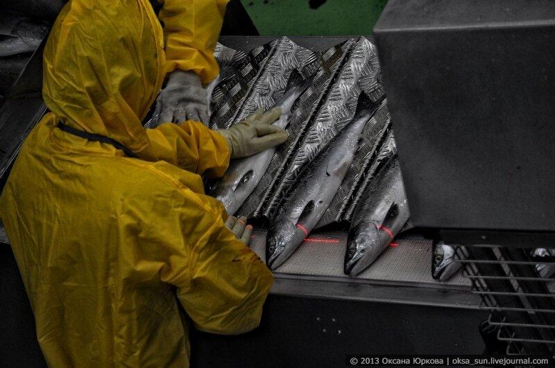 Рыбоперерабатывающий завод в Рейдово, о. Итуруп