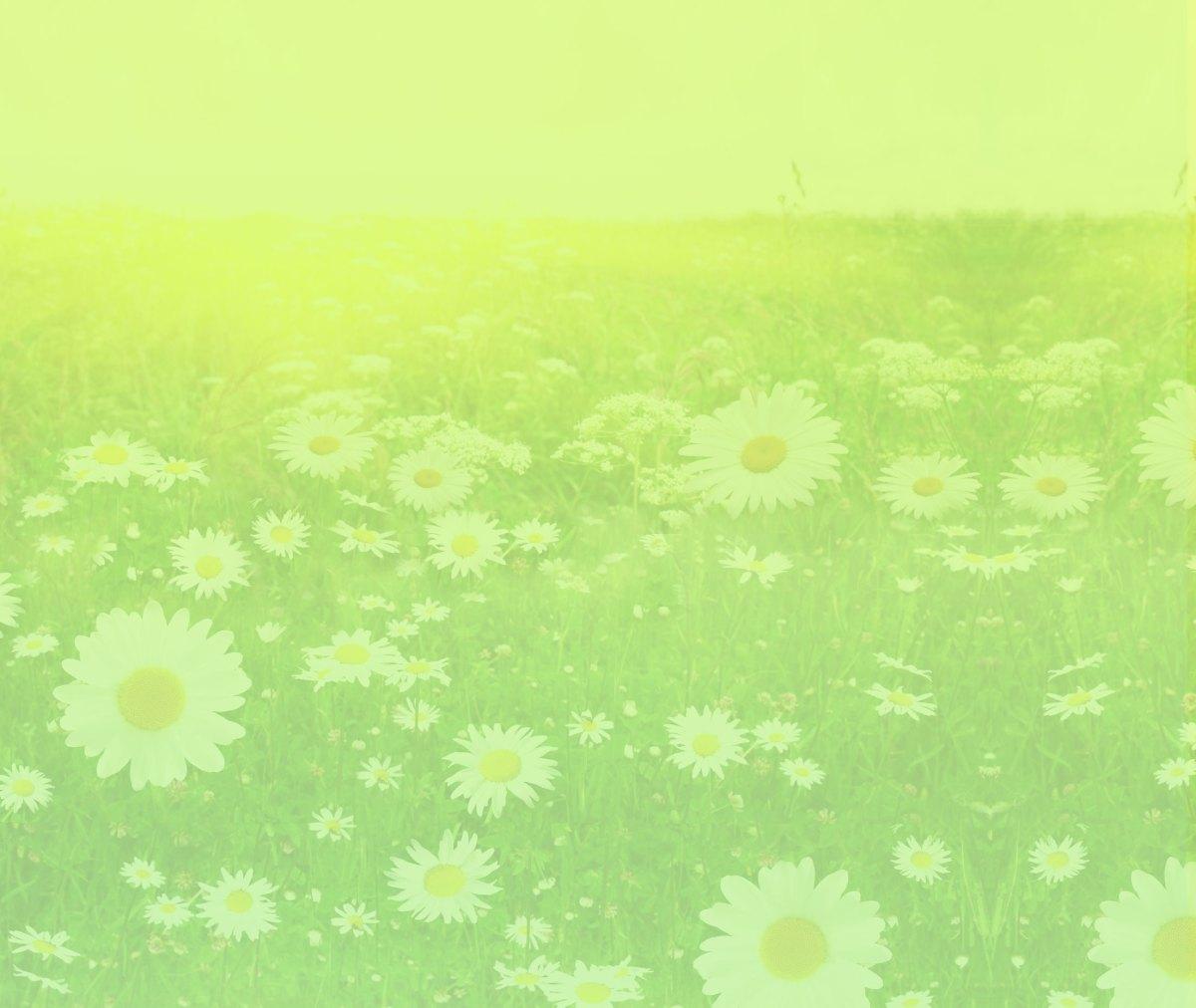 background daisys yellow