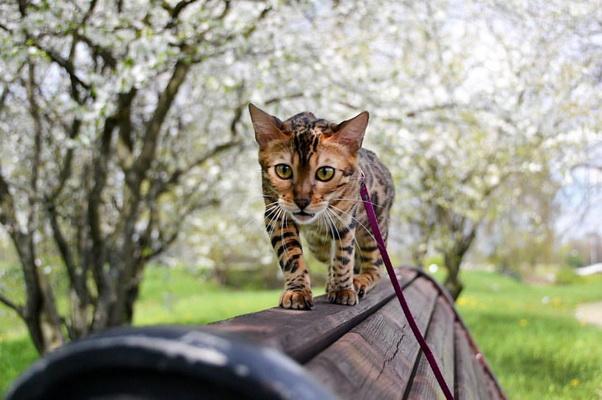 Российский дизайнер Sofia Gritsyuk создал коллаборацию с популярной кошкой Симба