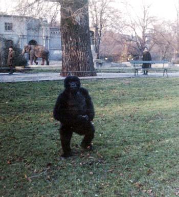 televizyon-goril-deneyi