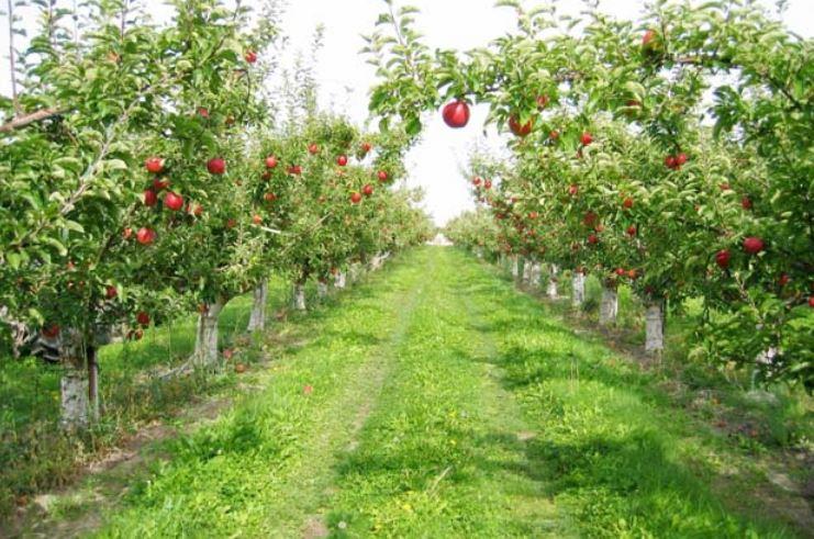 Beykoz'un Yeni Mesire Alanları ve Renkli Meyve Bahçesi
