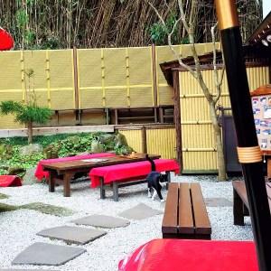 江ノ島内のお茶屋さんに居た猫