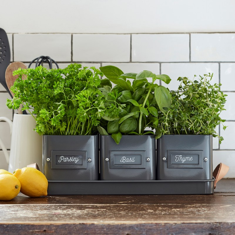 Burgon & Ball – Charcoal Grey Coloured 3 Herb Pots in a Leather Handled Tray