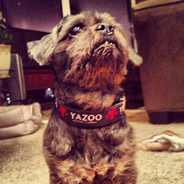 Yazoo Bottle Opener Dog Collar