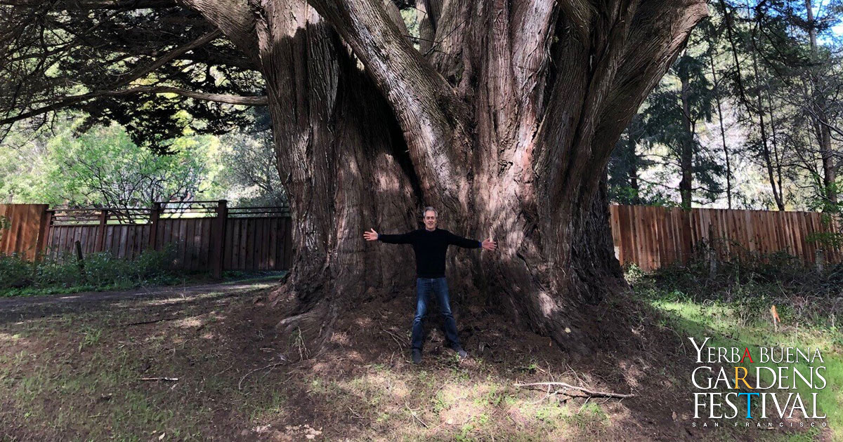 Mike Sullivan standing with arms and legs stretched out wide in front of the trunk of a giant tree, which is three times the length of Mike's wingspan.