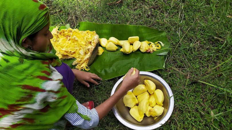 Today, jackfruit trees are everywhere in Sri Lanka and are a vital source of protein for local residents (Credit: Credit: Sahid Laskar)