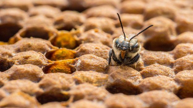 Όταν οι μέλισσες ξυπνούν, θυμούνται;  (Πίστωση: Phil Savoie / naturepl.com)