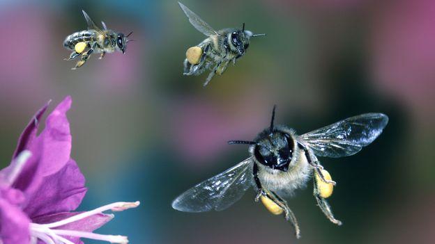 Οι μέλισσες έχουν πολυάσχολη ζωή (Credit: Kim Taylor / naturepl.com)
