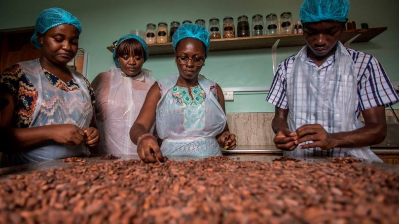 The cocoa bean is the most valuable part of the crop, but other parts of the cocoa plant have their uses too (Credit: Getty Images)