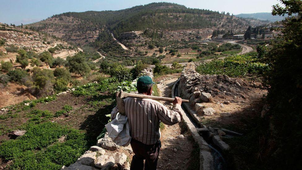 The Woman Saving Palestinian Heirloom Seeds