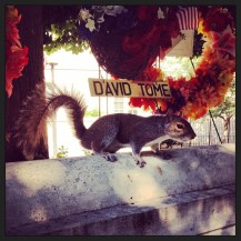 While at the National Law Enforcement Memorial, we paid our respects...and met a squirrel.