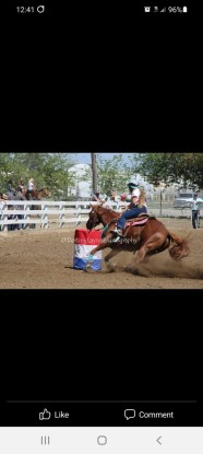 Youth or adult  barrel mare