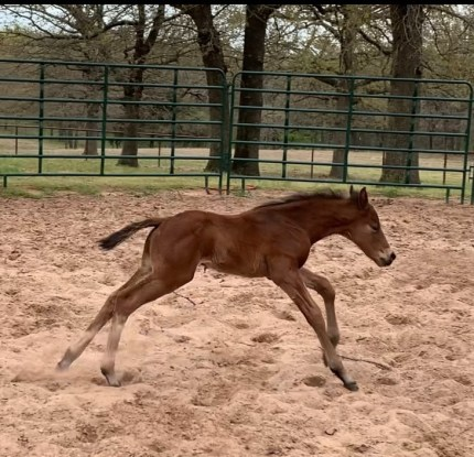 Very Classy Epic Leader stud colt out of a Producing PYC daughter!