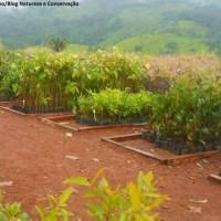 Soluções Ambientais, Segurança do Trabalho e Máquinas para Serraria
