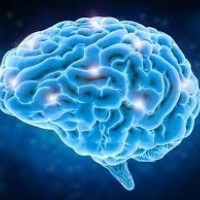 Join us for 'Am I just my brain?' talk and discussion