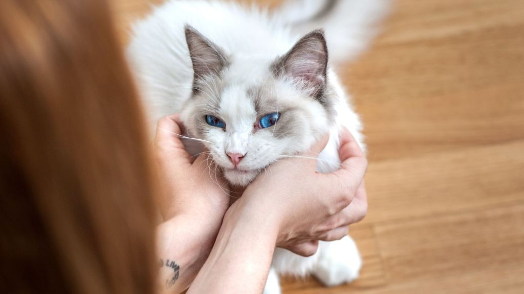 There have been cases of Coronavirus circulating in the UK, with two cats infected by their owners