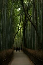 Schoolgirls walk through the Bamboo grove at dusk