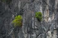 Rock Face in Halong Bay