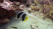 long_tail_fish