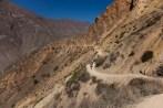Colca-Canyon-29