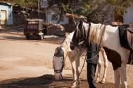 GB13_India_Udaipur_Blog-35