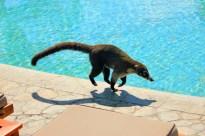 CR Poolside Critter
