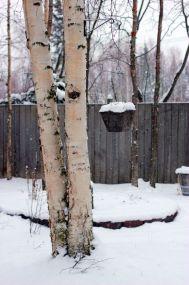 January 20, 2013: Snowy Birches