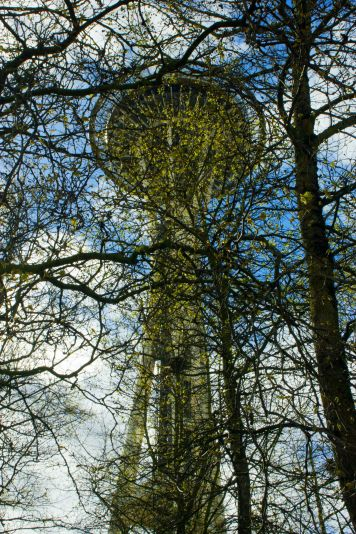 April 8, 2013: Space Needle Through Trees