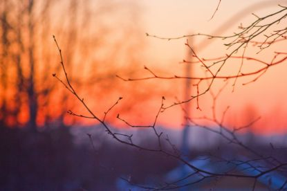 March 19, 2013: Sunset Branches