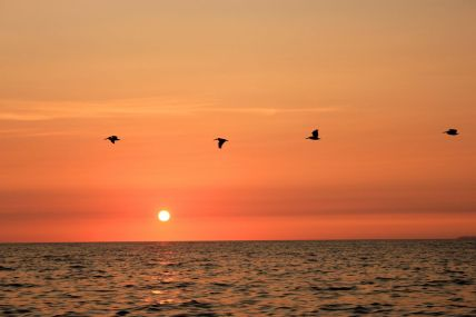 May 12, 2013: Pelicans at Sunset